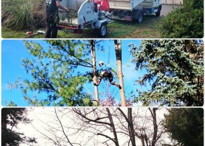 Elagages d'arbres et broyage