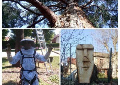 Taille bois mort, intervention essain, sculpture sur bois