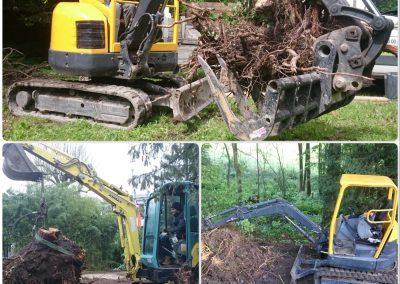 Arrachage de souches d'arbres